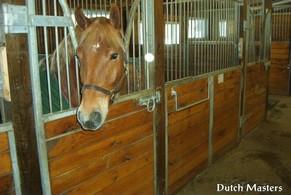 Albro Creek Farm Dutch Masters Horse Barn Builders Ontario